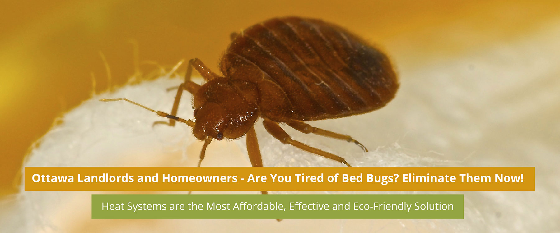 Bed Bug Heat Treatment Rent Bed Bug Heat Treatment