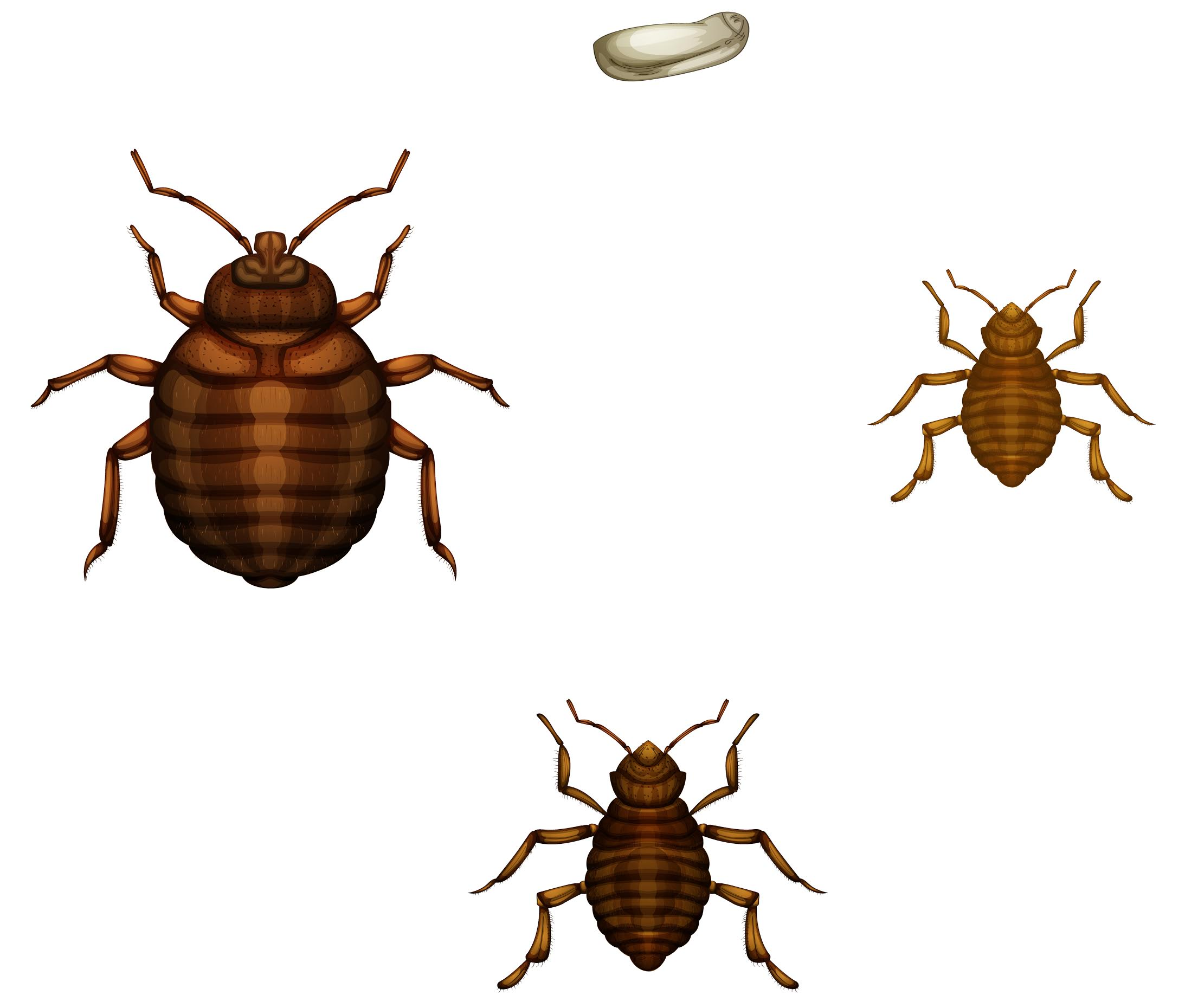 Ottawa Bed Bug FAQs Answer to Your Bed Bug Questions