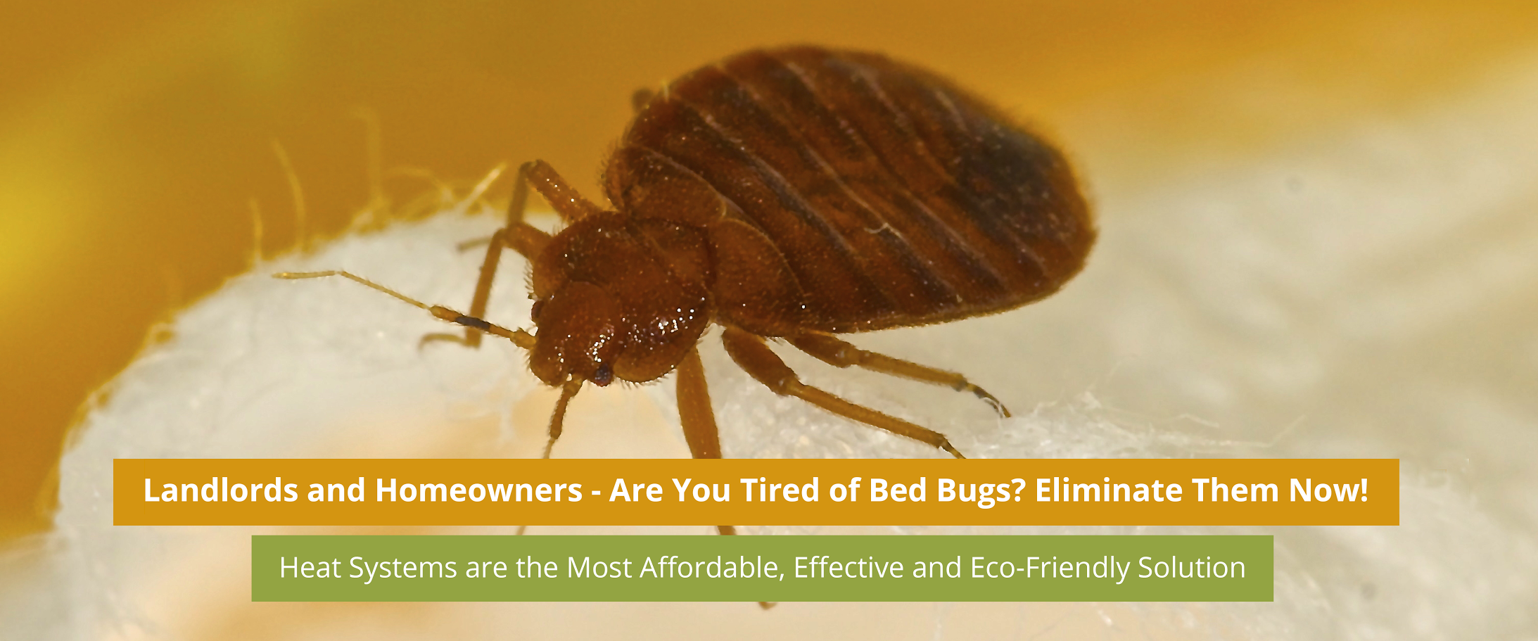 Bed Bug Treatment Cost 28 Images Bed Bug Fumigation Cost Purple And Grey Living Room Ideas
